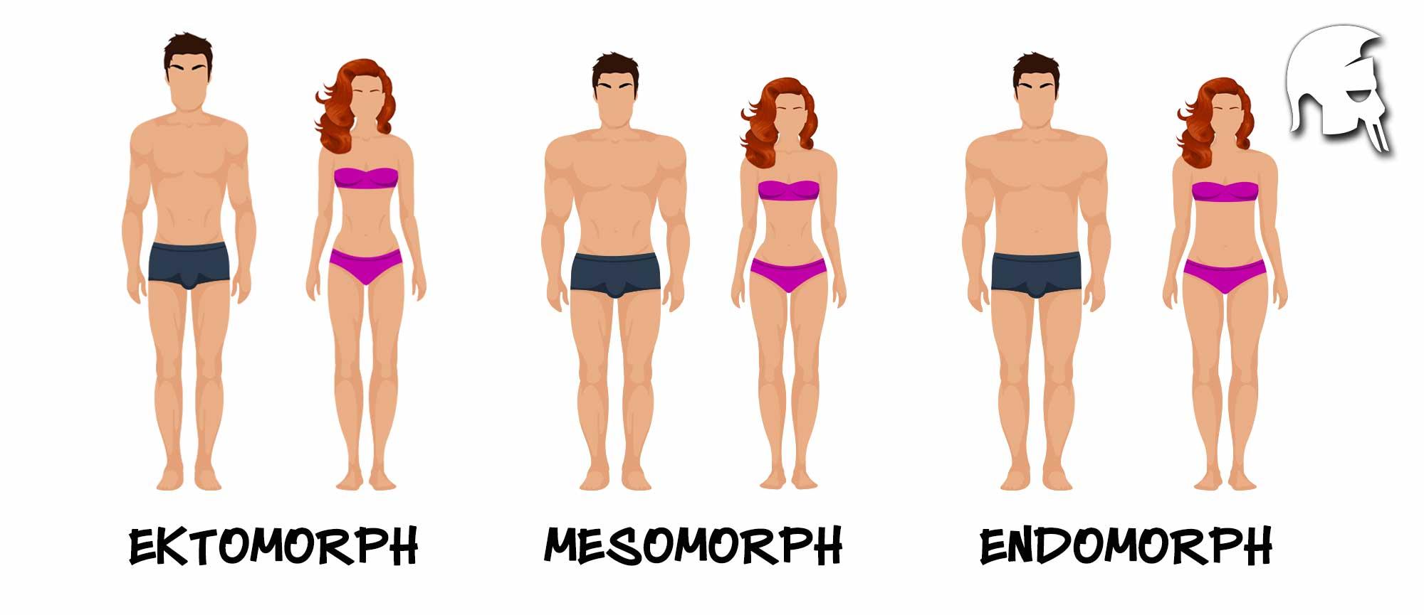 Ektomorph, Endomorph, Mesomorph